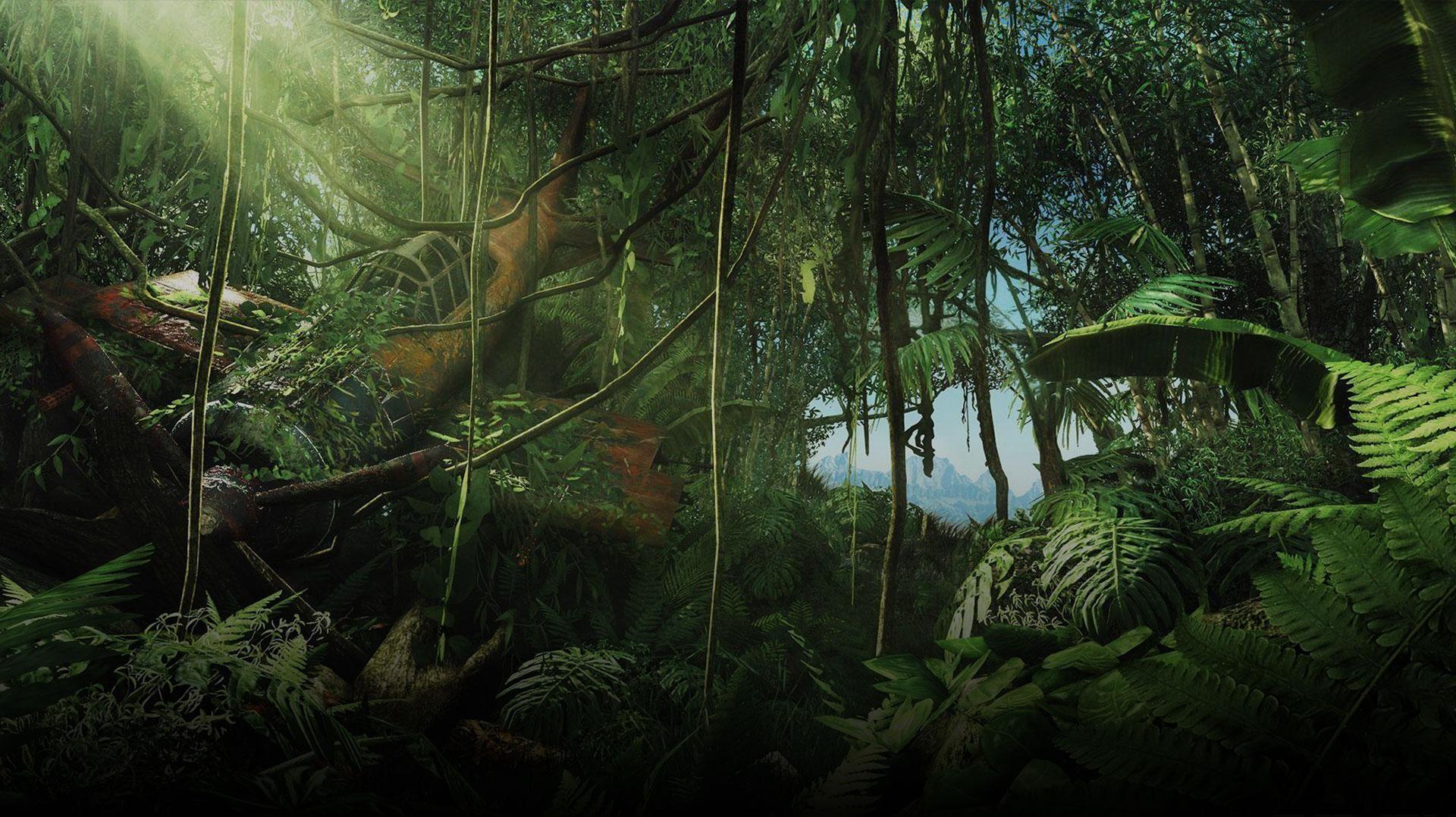 Law of the Jungle marketing compliance jungle image